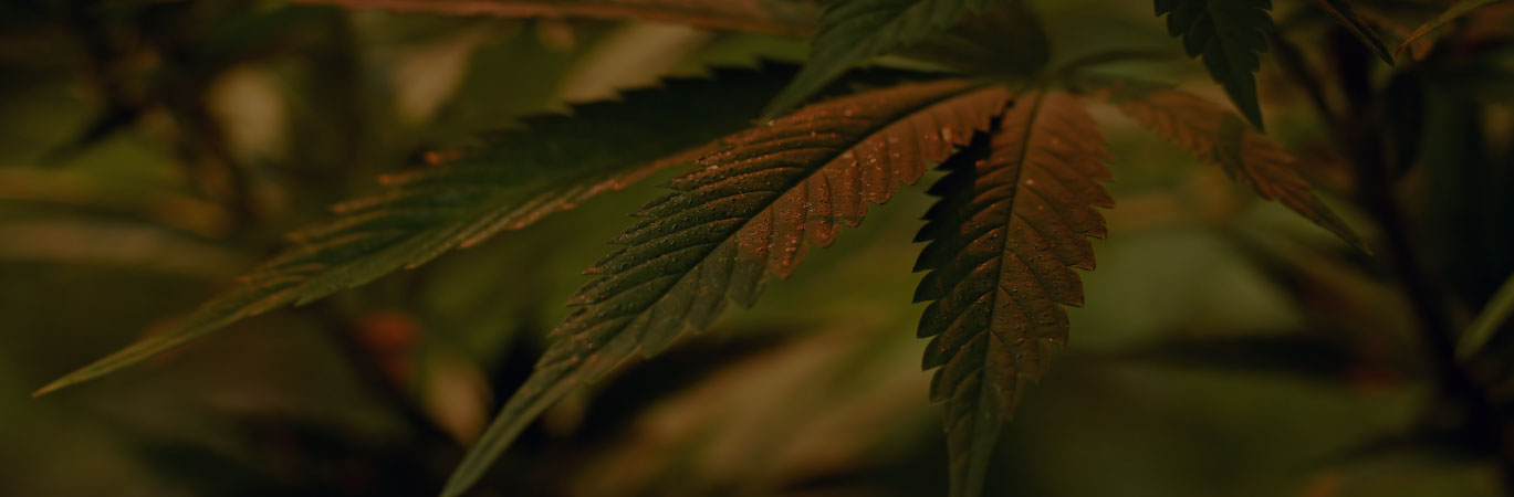 cannabis taxes accounting