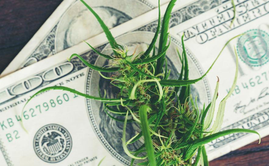 Marijuana Industry Updates