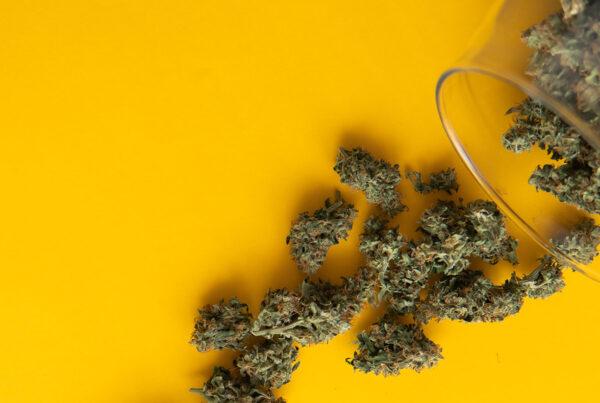 Act Resources Cannabis Coronavirus
