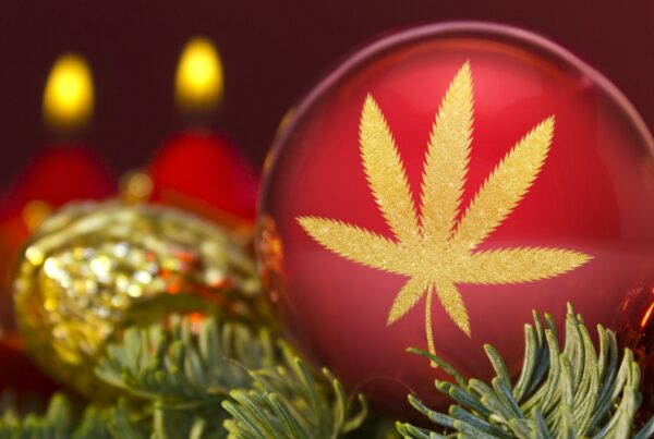 marijuana christmas news